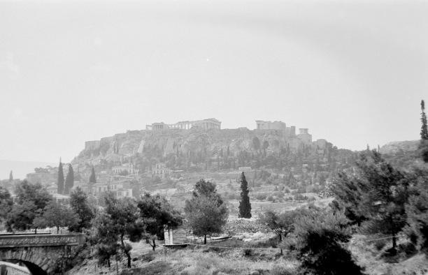 Athene-03785