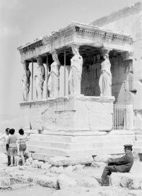Athene-03786