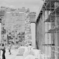 Athene-03787