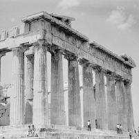 Athene-03788