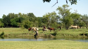 Horses drinking from the river